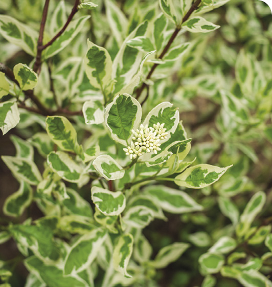 Beyond Summer Shrubs
